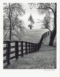 """Shilesh Jani - \""""Fence, Trees Encased in Ice\"""""""