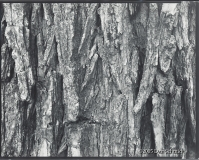 "Dan Schmidt - ""Tree Detail\"""