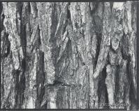 """Dan Schmidt - \""""Tree Detail\"""""""