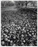 "John McLaine - ""Death of an Orchardist\"""