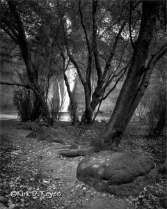 Calf Creek Falls and Trees